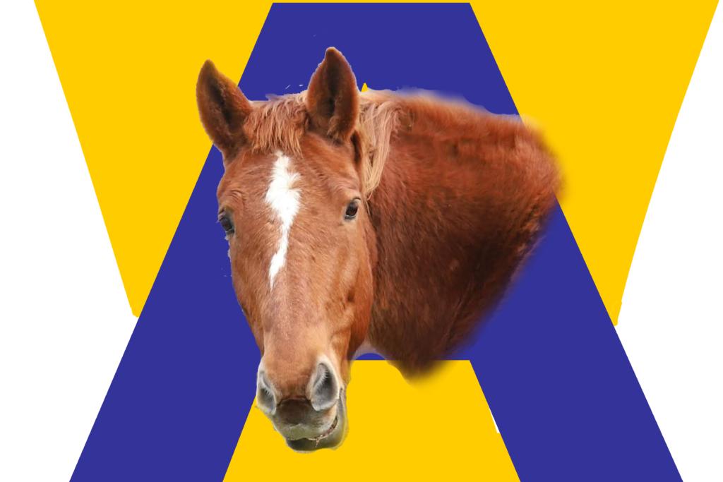 Avalon Racing Flag