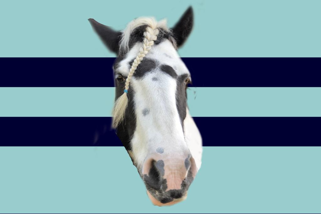 Bailey Race Flag