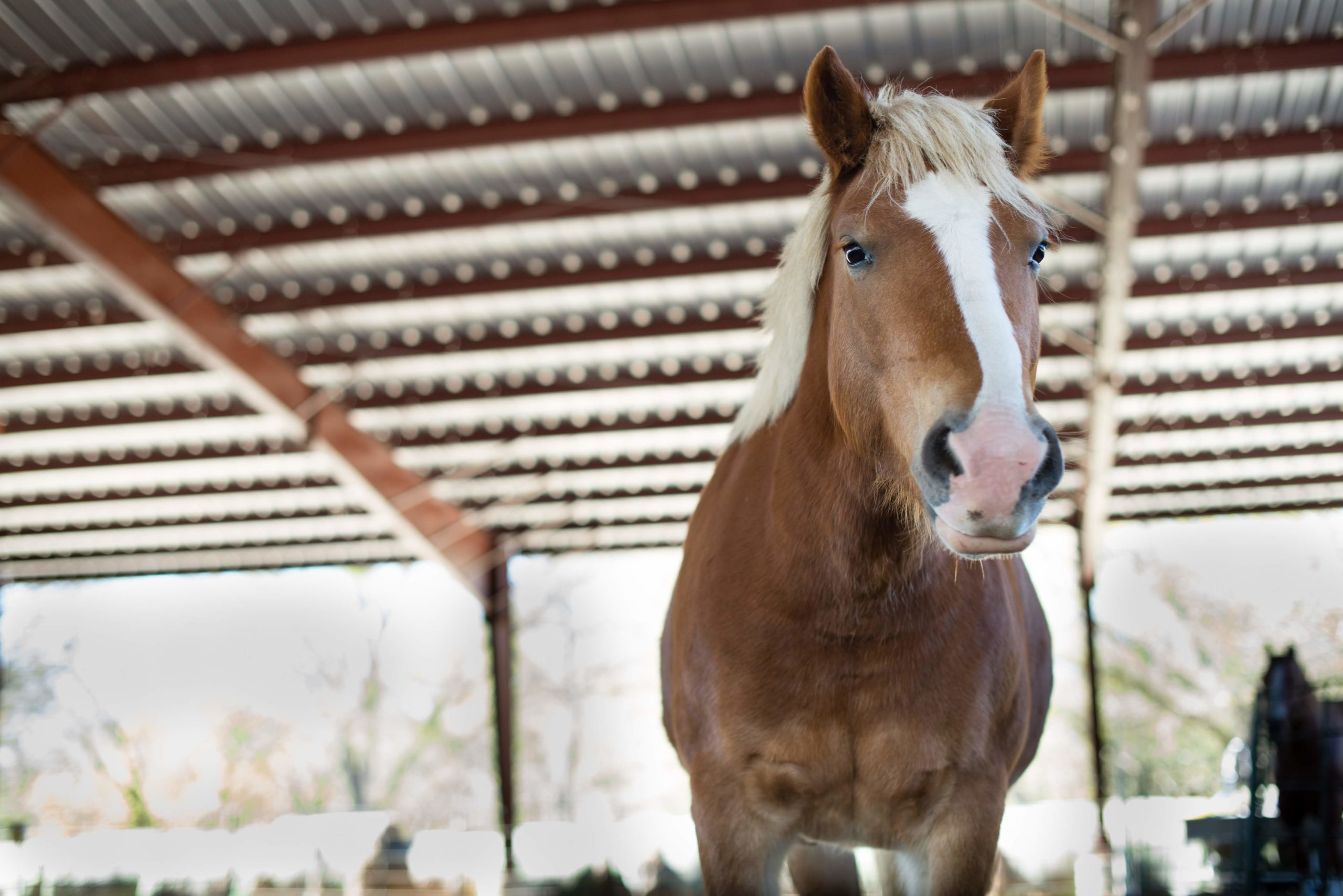 Peach the Horse